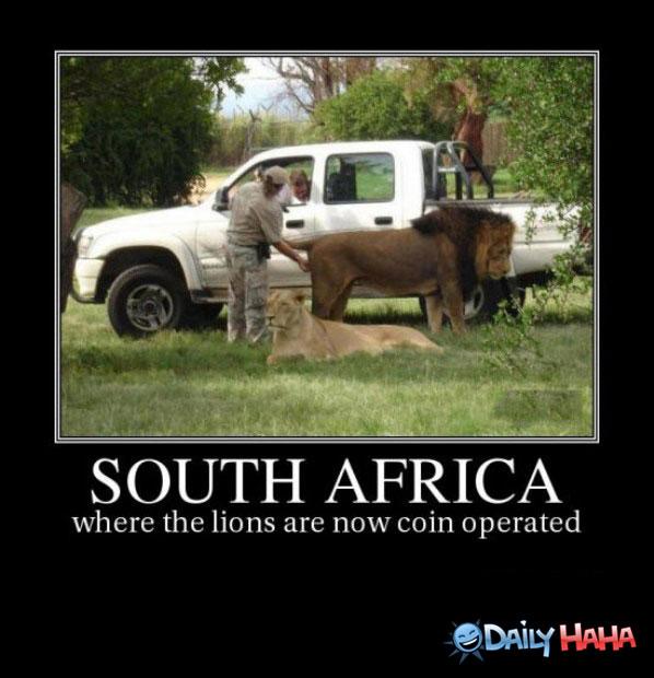 coinoperatedlions